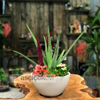 Aloe Vera Bitkisi ile Hayatınız Değişiyor