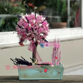 Canlı Cipso Çiçek Fiyatları