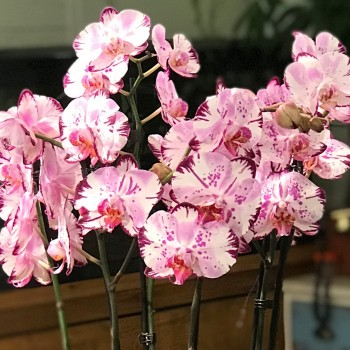 Kış Ayının En Güzel 5 Çiçeği