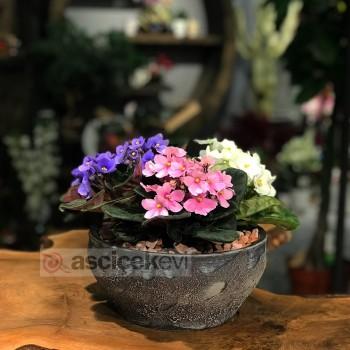 Kışa Dayanıklı Çiçekler