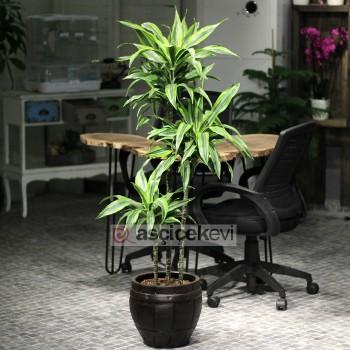 Ofis İçin Çiçek Dekorasyonu
