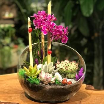 Mor Orkide Anlamı ve Mor Orkide Bakımı