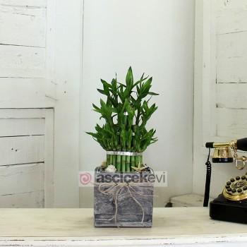 Şans Bambuları Hayatınıza Şans Getiriyor!