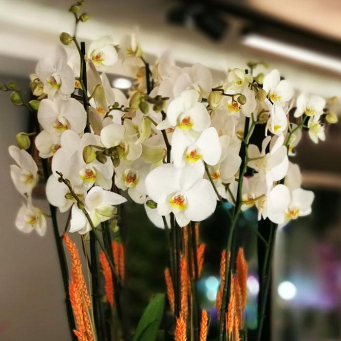Metalde 10 Dal Beyaz Orkide alt