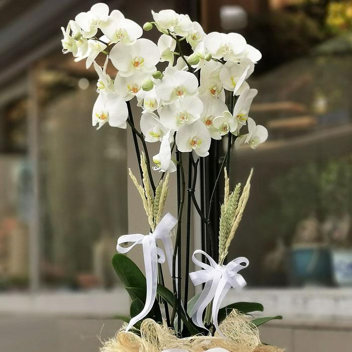 Metal Saksıda Orkideler alt