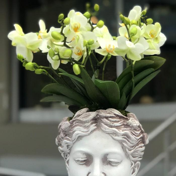 Afrodit - Orkide alt
