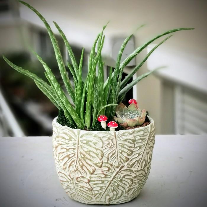 Aloe Vera Çiçeği alt