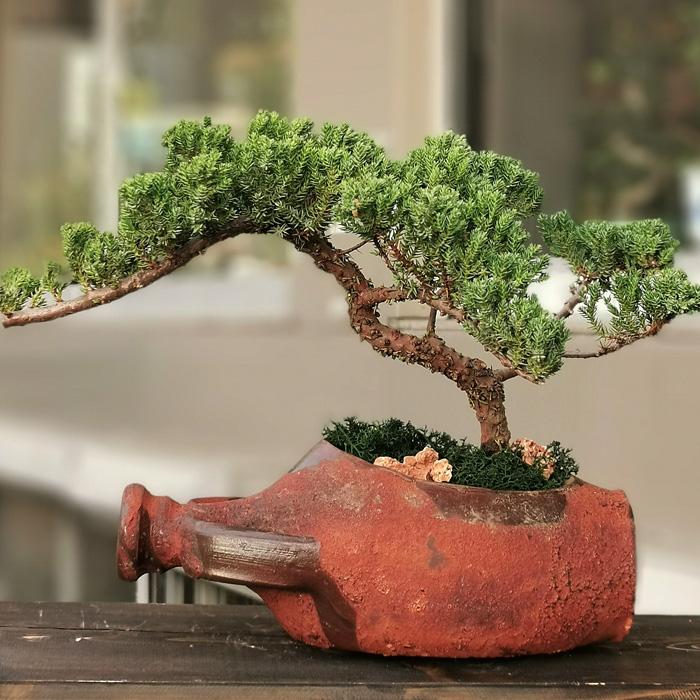 Anfora Testide Juniperus