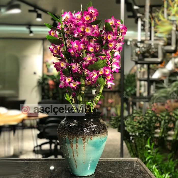 4 Dallı Bambu Orkide