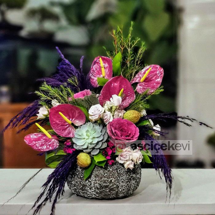Roxette Anthurium