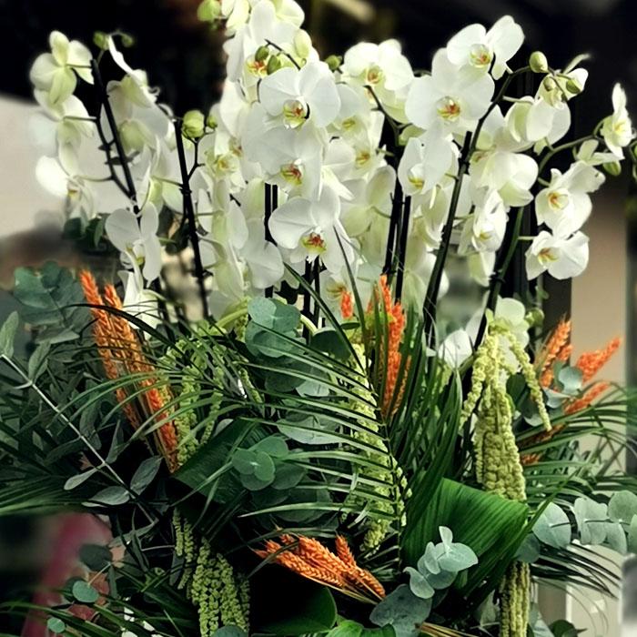 Elysium - Beyaz Orkideler alt