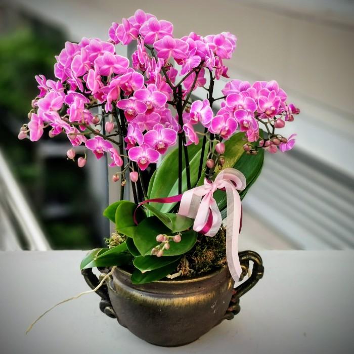 Özel Fuşya Orkide alt