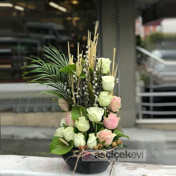Pembe Beyaz Güller