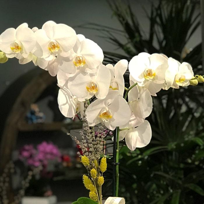 Kitap Seramikte Orkide alt