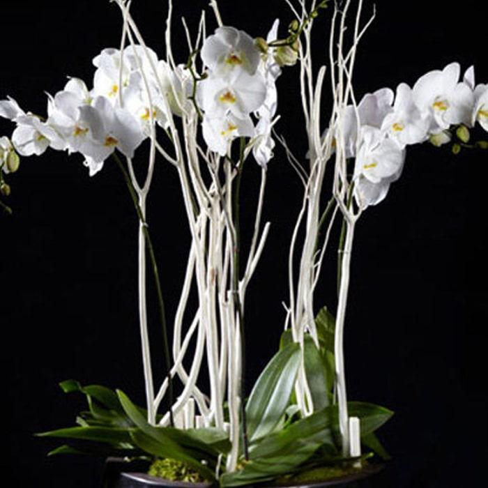 Beyaz Orkideler alt
