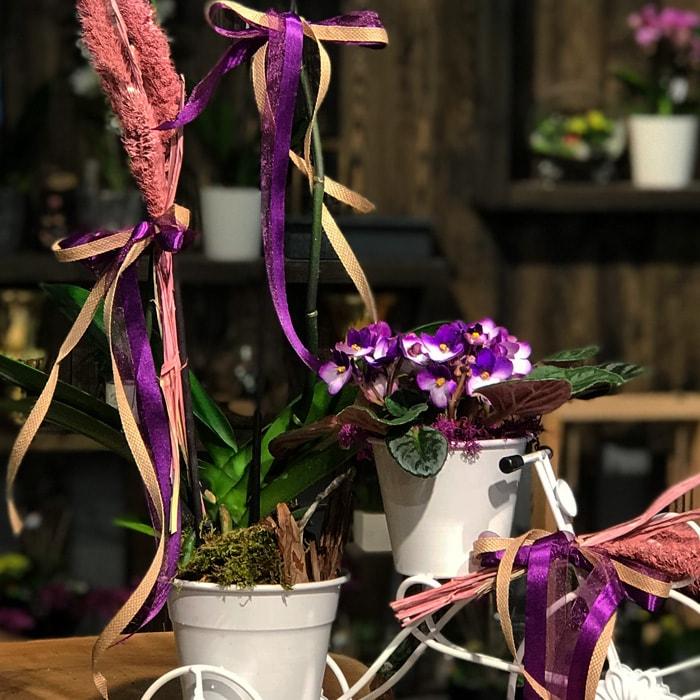 Bisiklette Orkide ve Menekşe alt