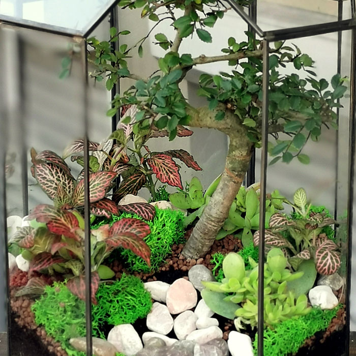 Terraryum Bonsai