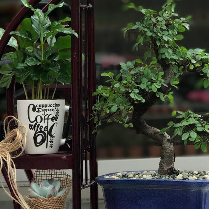 Bonsai ve Kahve alt