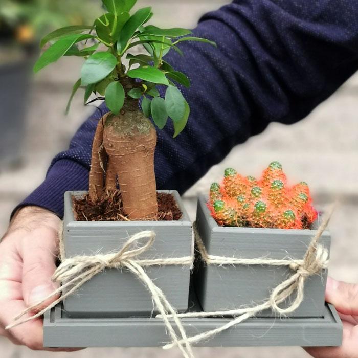 Mini Bonsai Ve Kaktüs alt