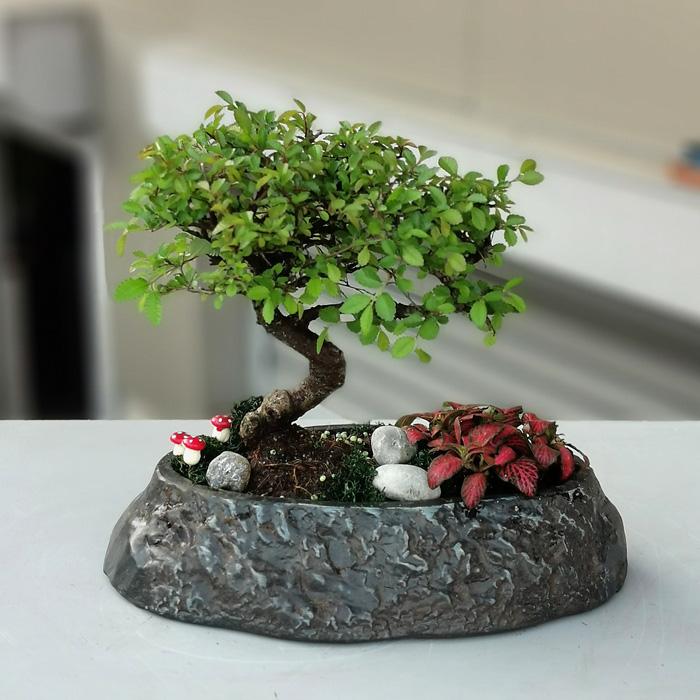 Dekoratif Saksıda Bonsai alt