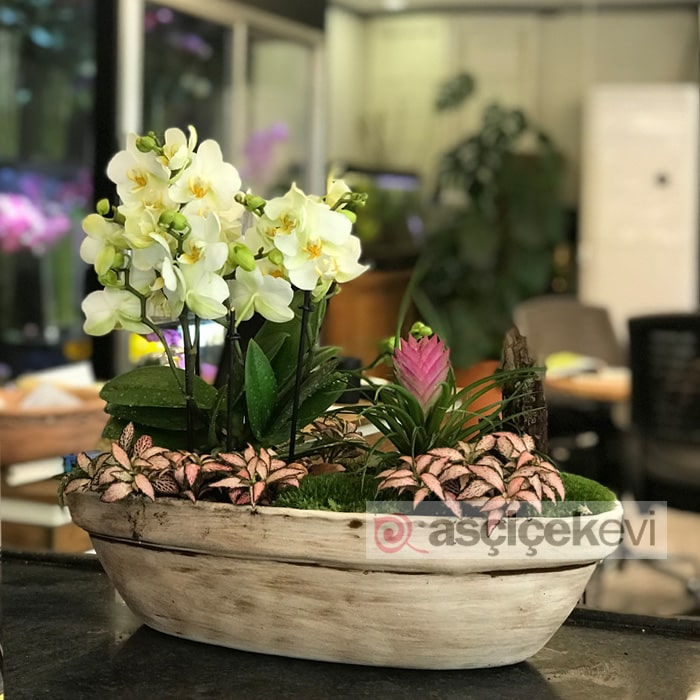 Orkide Bahçesi