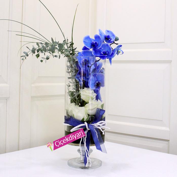 Camda Mavi Orkide