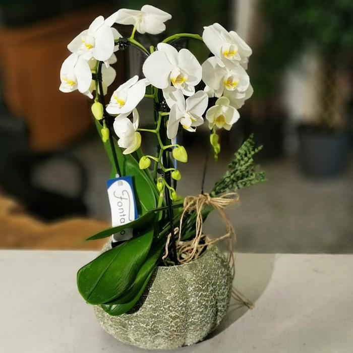 Formidablo Orkide alt