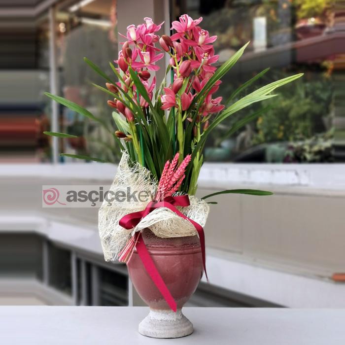 Cymbidium Orkide