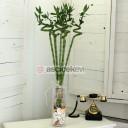 Sağlık ve Şans-7 Bambu