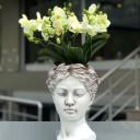 Afrodit - Orkide