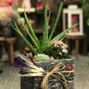 Aloe Vera Çiçeği
