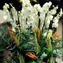 Elysium - Beyaz Orkideler