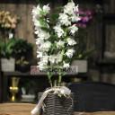 Bambu Orkide - Dendrobium