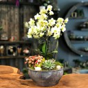 Anadolu Hisarı Orkide