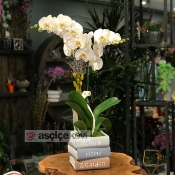 Kitap Seramikte Orkide