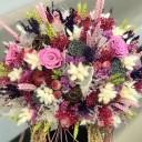 Pamfilya Kuru Çiçek