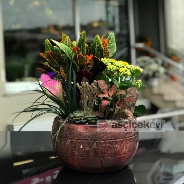 Bitki Arajmanı