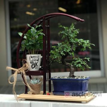 Bonsai ve Kahve