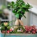 Bonsai Bahçesi
