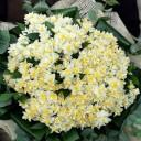 Nergis Çiçek Buketi