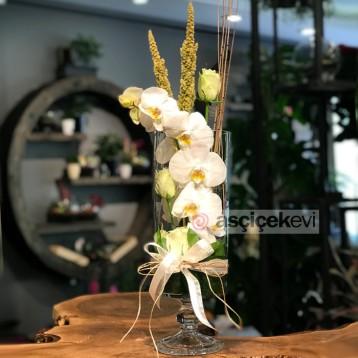 Cam İçinde Beyaz Orkide