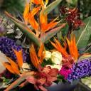 Cennet Kuşu Çiçeği