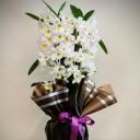 Kokulu Dendrobium Orkide