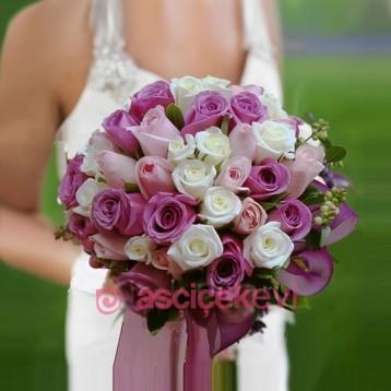 Eflatun Pembe Beyaz Gelin Çiçeği