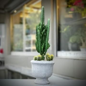 Euphorbia Kaktüs