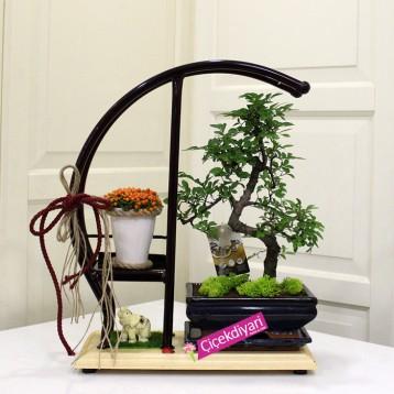 Özel Bonsai