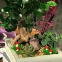 Bonsai ve Sukkulentler
