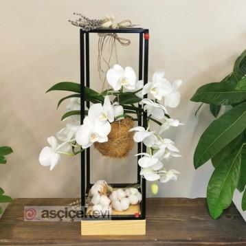 Kokedama Meander Orkide