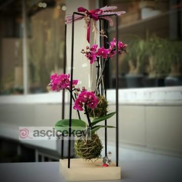 Kokedama Orkide