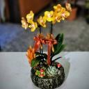 Las Vegas Orkide